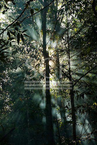 Mato Grosso State, Brazil. Aldeia Metuktire (Kayapo). Sunlight coming through the canopy.