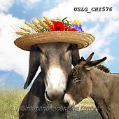 CHIARA,REALISTIC ANIMALS, REALISTISCHE TIERE, ANIMALES REALISTICOS, paintings+++++,USLGCHI576,#A#, EVERYDAY ,photos