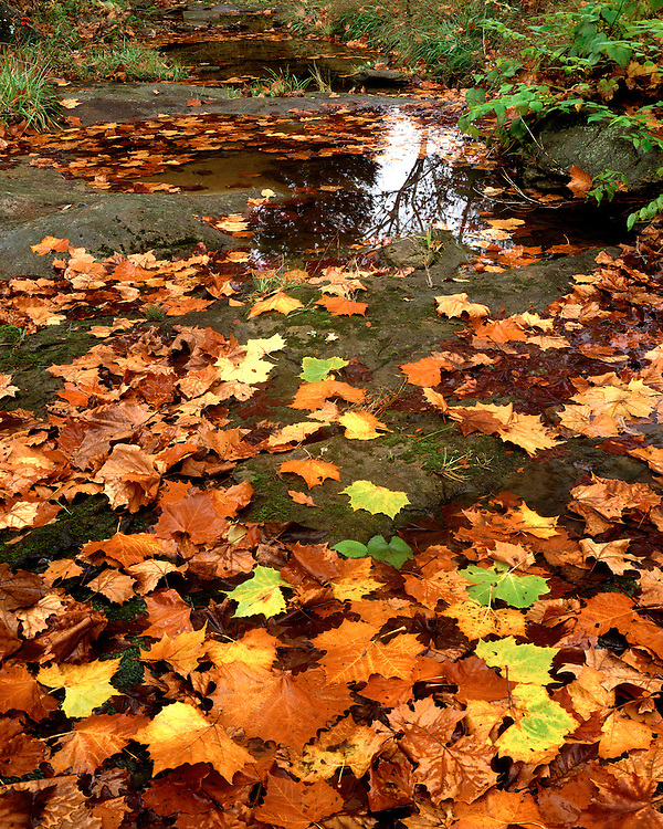 Leaf-covered rocky stream bed; Dixon Springs State Park, Shawnee National Forest, IL