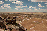 Badlands and ancient trees in Petrified Forest National Park.