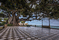 Fine Art Landscape Photograph of an amazingly large old tree at the end of an intricate tile walkway that is situated along the coastal sea wall in Cadiz Spain.