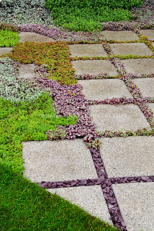 Sedum Succulent Plants Between Stone Stepping Stones In Garden Path, With  Lawn, Groundcover Plants