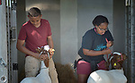 Mangstab Gebray and Sara Goitom, both resettled refugees from Eritrea, brace their goats on a farm in Linville, Virginia, on July 18, 2017. Resettled in the area by Church World Service, they are preparing to show sheep and goats in a county fair.<br />