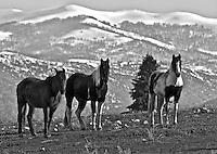 Three Amigos, horses in Kamas, Utah