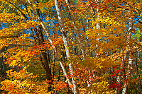 Autumn trees on Horseshoe Lake<br />Near Parry Sound<br />Ontario<br />Canada