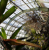 Tropical Rainforest Glasshouse (formerly Le Jardin d'Hiver), 1936, René Berger, Jardin des Plantes, Museum National d'Histoire Naturelle, Paris, France. General view of luxuriant Tropical foliage, seen in the morning light, beneath the glass and metal roof structure of the Art Deco Glasshouse.