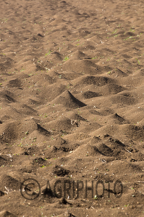 Soil that has blown during the Winter <br /> Picture Tim Scrivener 07850 303986 <br /> scrivphoto@btinternet.com<br /> &hellip;.covering agriculture in the UK&hellip;.