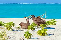 bird, black-footed albatross, or black footed albatross, Phoebastria nigripes, Midway Atoll, Papahanaumokuakea Marine National Monumen, Northwestern Hawaiian Islands, or Leeward Islands, Hawaii, USAan Islands, NorthwesternHI, Papahanaumokuakea Marine National Monument, Hawaii, USA, Pacific Ocean