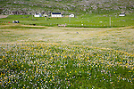 Croft farmhouses in small village of Borgh, Barra, Outer Hebrides, Scotland, UK