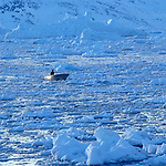 Inuit de Tassilaq revenant en bateau de la chasse au milieu des Icebergs. Groënland (côte Est). Région d'Angmagssalik (Ammasalik ou Tassilaq). Eskimos from Tassilaq on a boat on the middle of icebergs. Greenland (East coast).