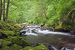 USA, OR, Columbia River Gorge,Tanner Creek