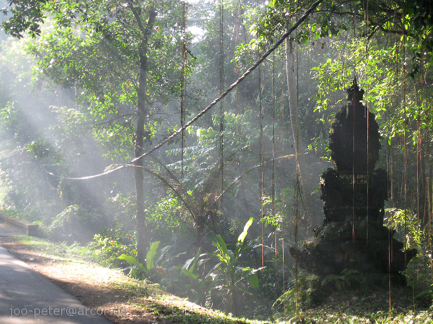 sunlight shines on sculpture in the forest, Bali, archipelago Indonesia