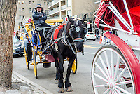 New York, NY - 31 March 2016 - Dante, a black carriage horse, awaits customers on Central Park South. ©Stacy Walsh Rosenstock