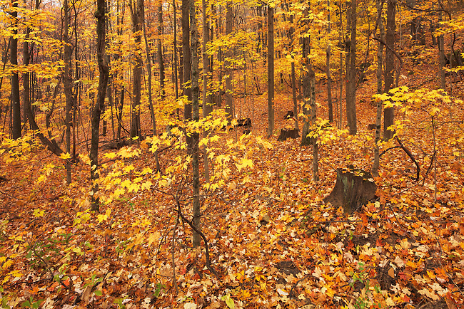 Autumn forest in recovery
