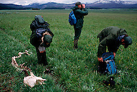 Rangers on study in Yellowstone National  Park come across a skeleton of a bison.