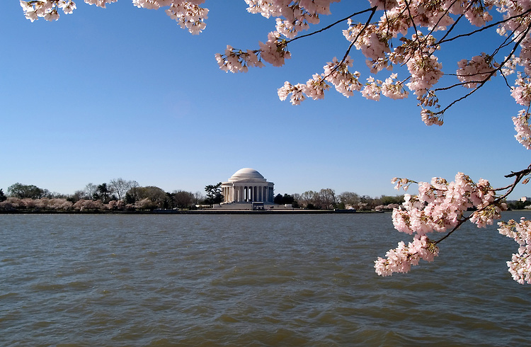 Washington, DC: Cherry Blossom Festival.  Cherry blossoms and Jefferson Memorial.  Photo #: washch102 (nef439)..Photo copyright Lee Foster, www.fostertravel.com, 510-549-2202, lee@fostertravel.com