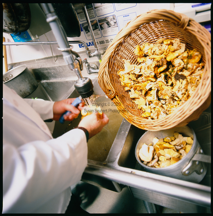 Freshly harvested Oregon Chanterelle mushrooms being washed in preparation for cooking