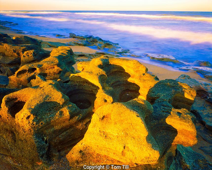 Coquina Sandstone Outcrops by the Atlantic Ocean, Washington Oaks Gardens State Park, Florida