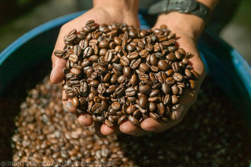 Coffee, Monte Verde, Costa Rica, Central America