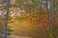 Sleeping Bear Dunes National Lakeshore, Michigan<br /> Morning sun streaks through the hardwood forest with fall colors near Loon Lake