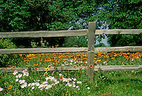 Split rail fence divides yard with wildflowers in summer