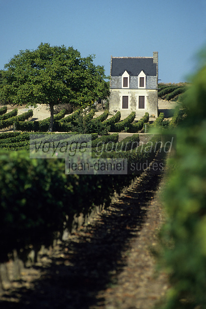 Europe/France/Centre/Indre-et-Loire/Vallée de la Loire/Chinon : Le vignoble - AOC Chinon