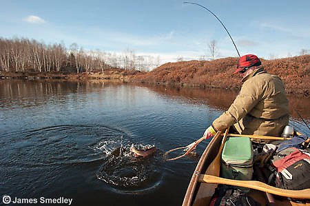 Angler catching a splake from his canoe.