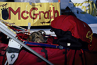 Lisa Frederic's Dog in the Basket at McGrath