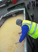 Walking the Combinable Crop Supply Chain, Masham.