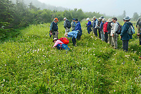 Pacific Horticulture Society hike in wildflower meadow on Glen Alps Trail in Chugach Mountains, Alaska