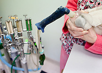 "Veterinary technician Elise Robinson anesthetizes ""Pepper,"" an African Grey parrot belonging to Barb Miller, during a microchip implantation procedure at the Avian Health Clinic on February 9, 2013."