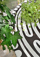 A green foliage plant on a brown and white patterned table. Ivy leaves trail nearby.