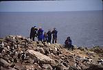 Rockhopper penguins and eco-tourists on New Island