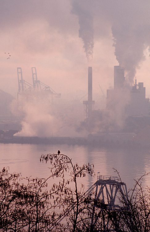 Pollution, Pulp Mill, Tacoma, Washington, Puget Sound, bird, robin, smog, Port of Tacoma, Commencement Bay, Tacoma, Washington State, Pacific Northwest,