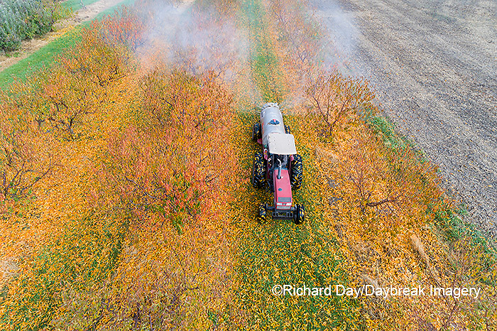 63801-12209 Spraying peach orchard in fall-aerial  Marion Co. IL