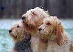 Otterhound Shopping cart has 3 Tabs:<br />