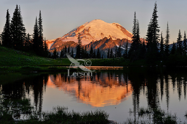 Mount Rainier at sunrise reflecting in subalpine tarn above Tipsoo Lake.  Mount Rainier National Park, summer.<br /> wildflower