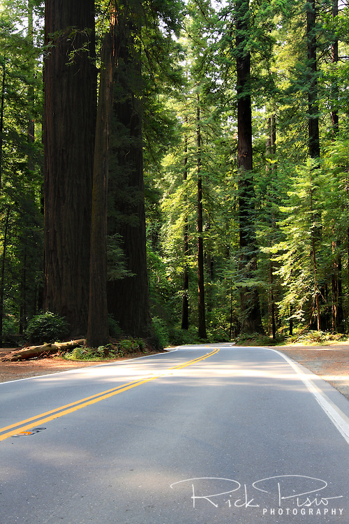 The Avenue of the Giants near Phillipsville, California, which once carried traffic through redwood groves as US 101 before being replaced by a four lane highway, is now a scenic drive through California's redwoods. Photographed 07/08