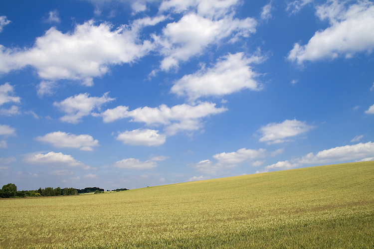 Europa, DEU, Deutschland, Nordrhein Westfalen, NRW, Ruhrgebiet, Ruhrtal, Muelheim, Agrarlandschaft, Typische Landschaft, Getreide, Anbau, Feld, Acker, Himmel, Wolken, Cumuluswolken, Kategorien und Themen, Landwirtschaft, Landwirtschaftlich, Agrar, Agrarwirtschaft, Erzeugung, Landwirtschaftliche Produkte, Natur, Naturfoto, Naturfotos, Naturfotografie, Naturphoto, Naturphotographie, Landschaft, Landschaften, Landschaftsfoto, Landschaftsfotografie, Landschaftsphoto, Landschaftsphotographie......[Fuer die Nutzung gelten die jeweils gueltigen Allgemeinen Liefer-und Geschaeftsbedingungen. Nutzung nur gegen Verwendungsmeldung und Nachweis. Download der AGB unter http://www.image-box.com oder werden auf Anfrage zugesendet. Freigabe ist vorher erforderlich. Jede Nutzung des Fotos ist honorarpflichtig gemaess derzeit gueltiger MFM Liste - Kontakt, Uwe Schmid-Fotografie, Duisburg, Tel. (+49).2065.677997, ..archiv@image-box.com, www.image-box.com]