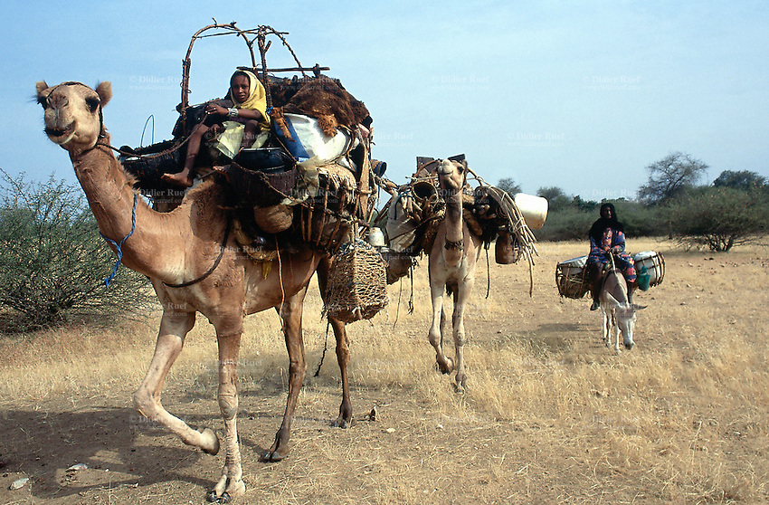 Sudan. West Darfur. A group of nomads ride camels and donkeys on the way to Habilah, because on sunday is market day. They will be able to shop for food and trade or buy animals in the village.  © 2004 Didier Ruef