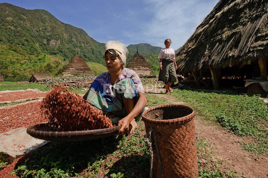 Woman dries coffee, Wae Rebo, Flores.