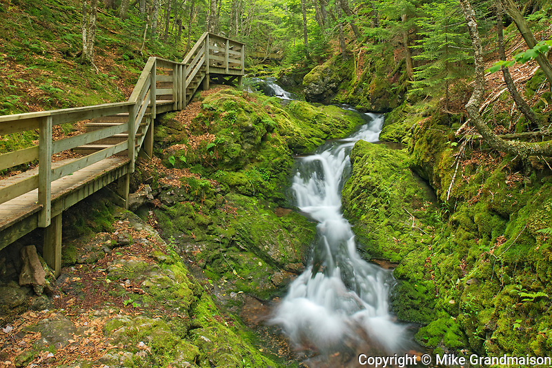 Dickson Falls and boardwalk<br />