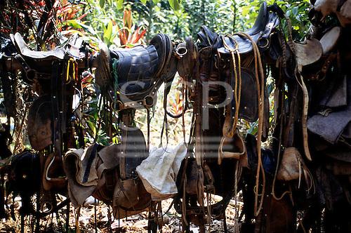 Osa Peninsula, Costa Rica. Lots of saddles slung over a wooden beam.