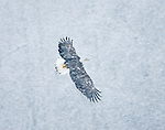 """Flying in Winter Weather"", Alaska"