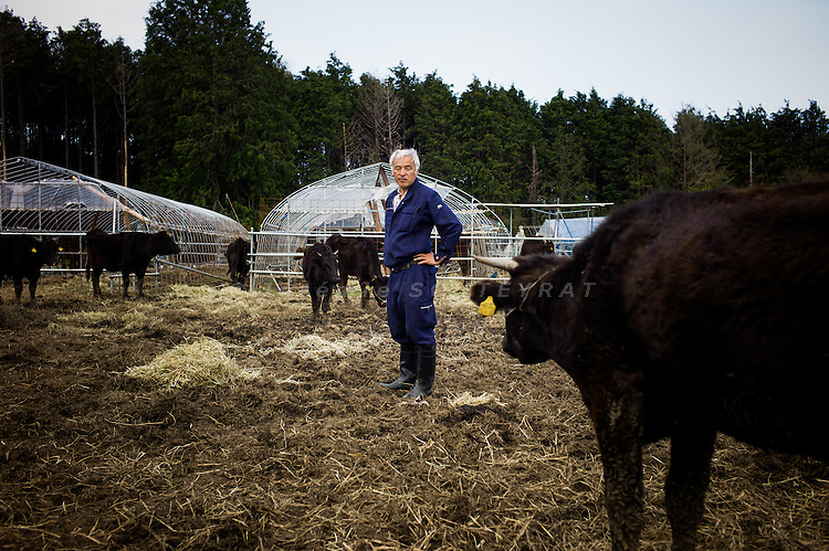 Tomioka, May 2 2012 - Naoto Matsumura, 52, refuses to leave the Fukushima nuclear evacuation zone. Since April 2011, he lives alone in his house without electrcicity and takes care of pets in the area. Mr Matsumura trying to capture a cow to take care of her.