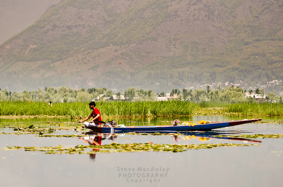 Man paddling traditional shikara, full of fresh cut flowers, Dal Lake, Srinagar, Kashmir, India.