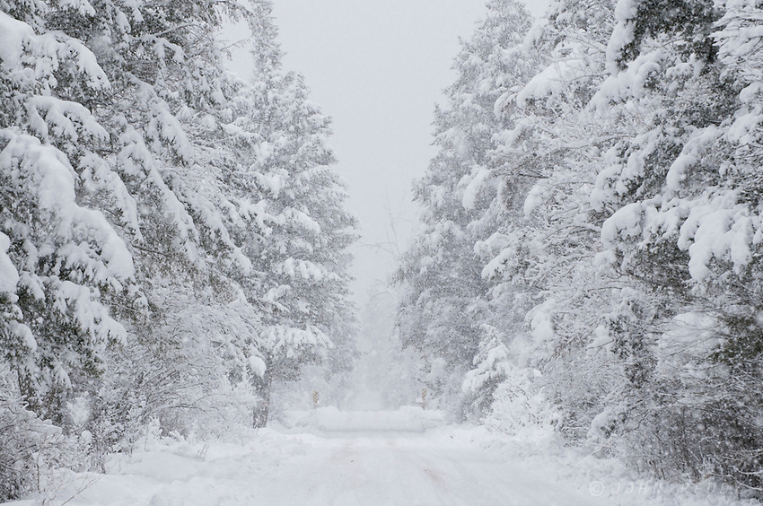 snowy landscape on Moose Creek road during blizzard in Rimini
