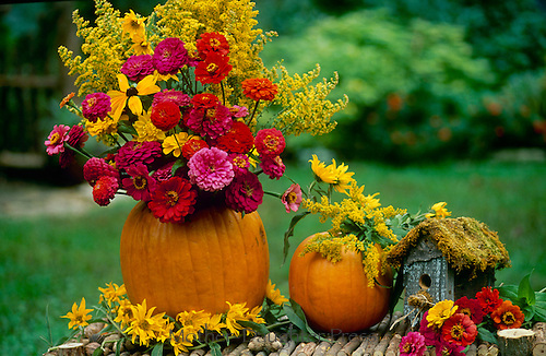 Pumpkin vase full of cut flowers as a decoration for fall harvest party, midwest USA