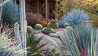 Cactus and succulents in California drought tolerant front yard, Schaff garden