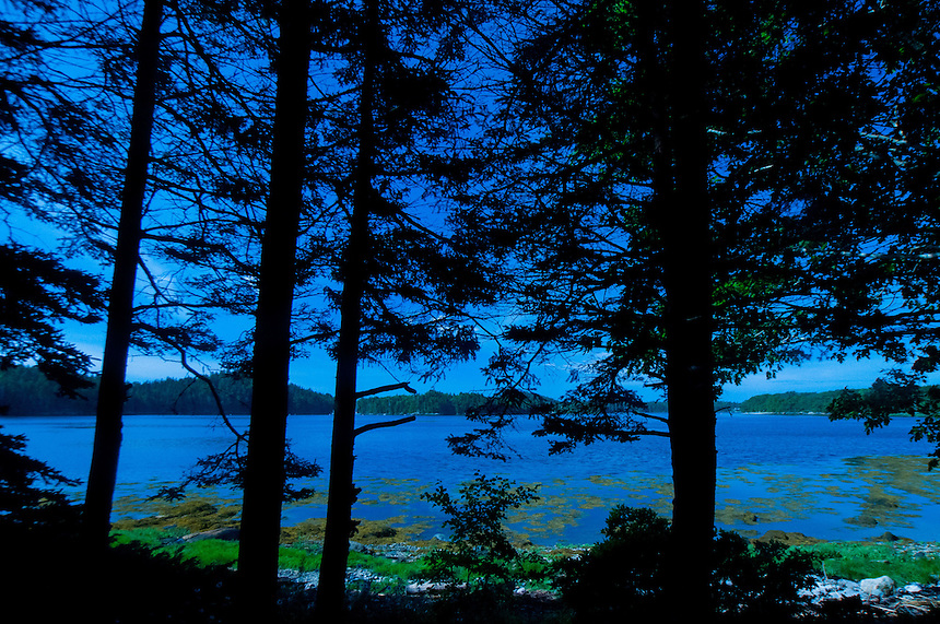 Through the Trees at Ram Island Campsite, Castine, Maine, US